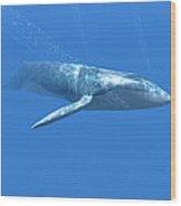 Blue Whale Wood Print