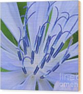 Blue Wild Flower Wood Print