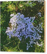 Blue Wild Flowers Wood Print