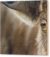 Blue Wildebeest Connochaetes Taurinus Wood Print