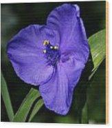 Blue Wildflower 6 Wood Print