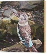 Blue-winged Kookaburra 2 Wood Print