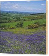 Bluebell Flowers On A Landscape, County Wood Print
