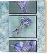 Bluebell Triptych Wood Print