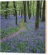 Bluebell Wood, Near Boyle, Co Wood Print