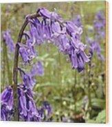 Bluebells (hyacinthoides Non-scripta) Wood Print