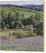 Bluebells In A Field, Sally Gap, County Wood Print