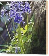 Bluebells In The Woods Wood Print