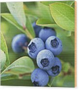 Blueberries Growing On A Shrub Wood Print