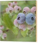 Blueberries (vaccinium Sp.) Wood Print