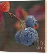 Blueberry Dewdrops Wood Print