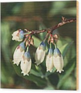 Blueberry Flowers Wood Print