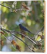 Bluebird At Rest Wood Print