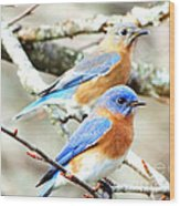 Bluebird Couple Wood Print