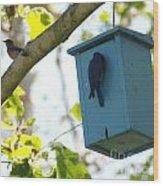 Bluebird Hanging Around Wood Print
