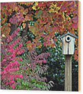 Bluebird House Color Surround Wood Print