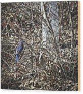 Bluebird In Barberries Squared Wood Print