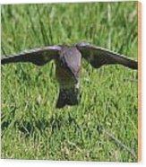 Bluebird In Flight Wood Print