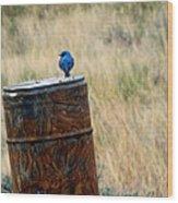Bluebird On A Barrel Wood Print