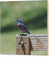 Bluebird On The Fence Wood Print