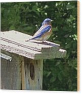Bluebirds Make Me Happy Wood Print