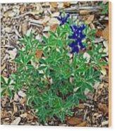 Bluebonnet II Wood Print