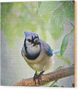 Bluejay In A Tree Wood Print