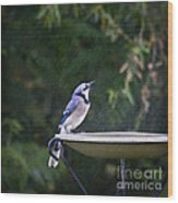 Bluejay In The Rain - Artist Cris Hayes Wood Print