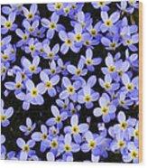 Bluets In Shade Wood Print