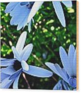 Bluey Twinkles Wood Print