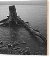 Bluffs Beach Stump Black And White  Wood Print
