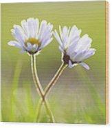Blumen Liebe Wood Print