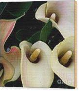 Blushing Calla Lilies Wood Print