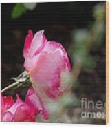 Blushing Pink Beauties Wood Print by Donna Parlow