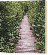 Boardwalk Swamp Wood Print