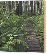 Boardwalk Winds Through The Forest Wood Print
