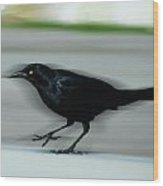 Boattail In The Fast Lane Wood Print