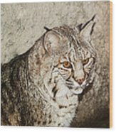 Bobcat Iv Wood Print by DiDi Higginbotham