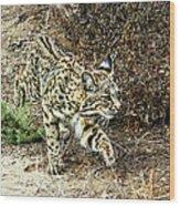 Bobcat Stalking Prey Wood Print