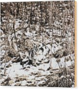 Bobcat Winter Wood Print