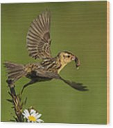 Bobolink Wood Print