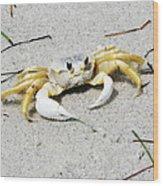 Boca Grande Crab Wood Print
