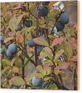 Bog Bilberry Wood Print