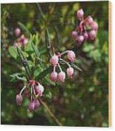 Bog-rosemary Wood Print
