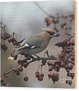 Bohemian Waxwing Wood Print by Chris Hill