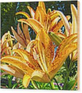 Bold Colorful Orange Lily Flowers Garden Wood Print