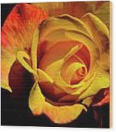 Bold Rose 2 Wood Print