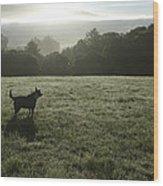 Bolinas, California, United States Dog Wood Print by Keenpress