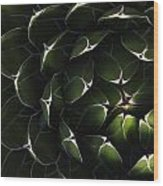 Bolivian Plant In Late Afternoon Light Wood Print by Robert Postma