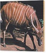 Bongo Wood Print